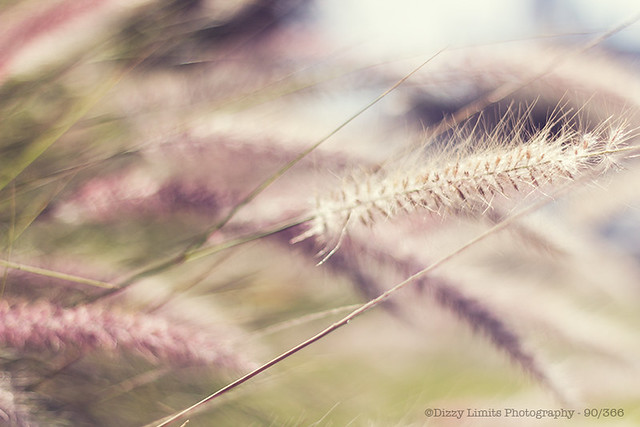 090/366 - Fluffy Flowers
