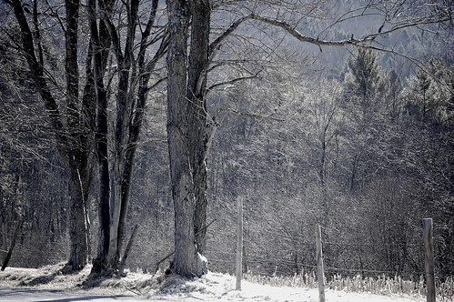 trees in winter. . . .