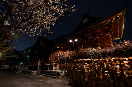 The plum of the Yushima-Tenjin