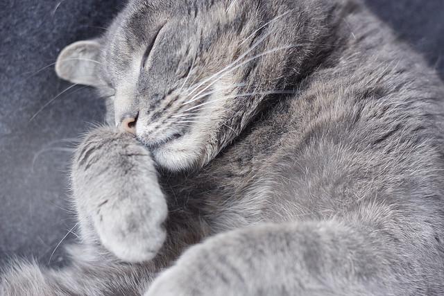 hejregina katt1