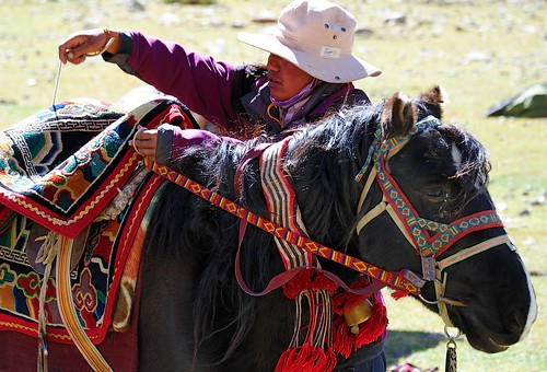 Tibetan Pony, being prepared for the Kailash kora in the Lha Chu river valley, Tibet by reurinkjan