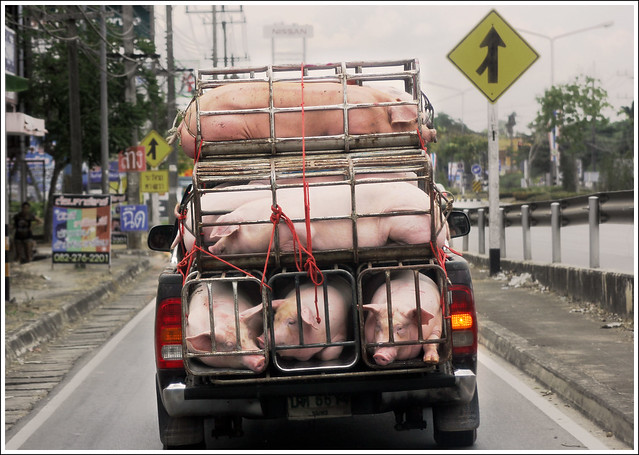 Pigs In A Food Truck
