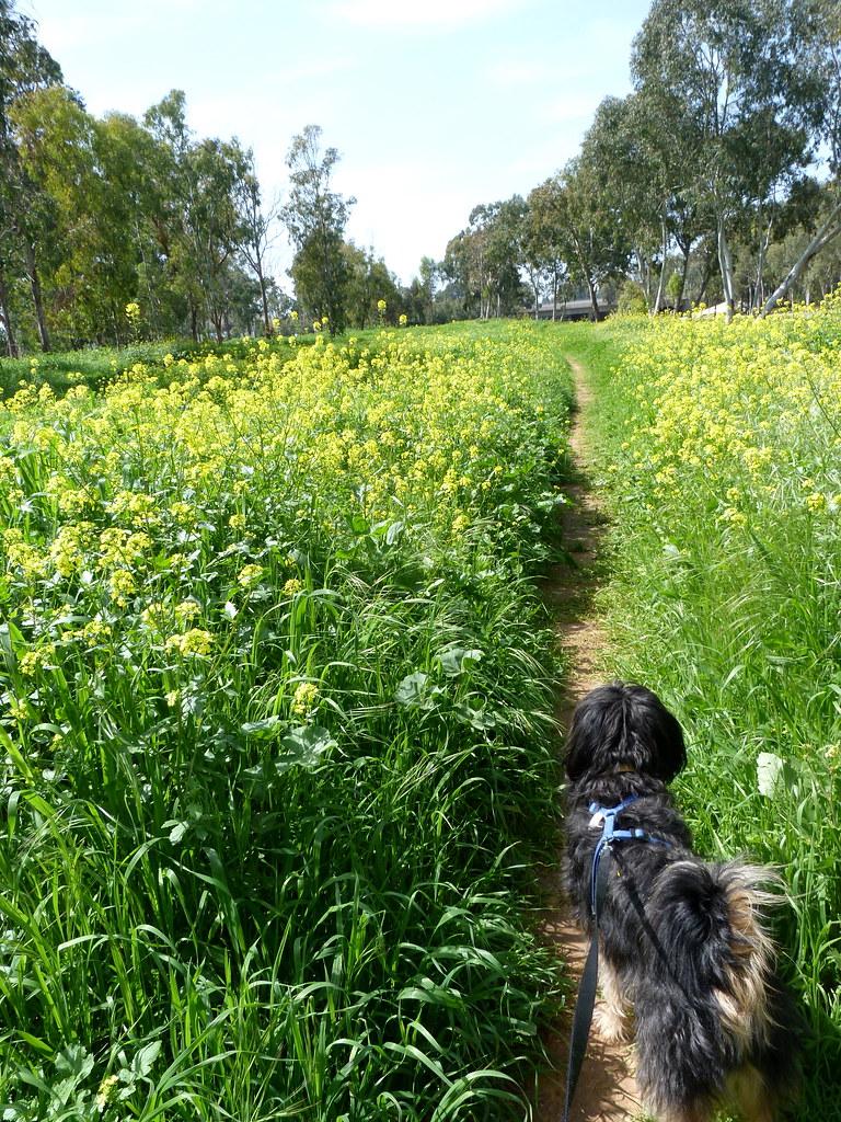 10-03-2012-on-path