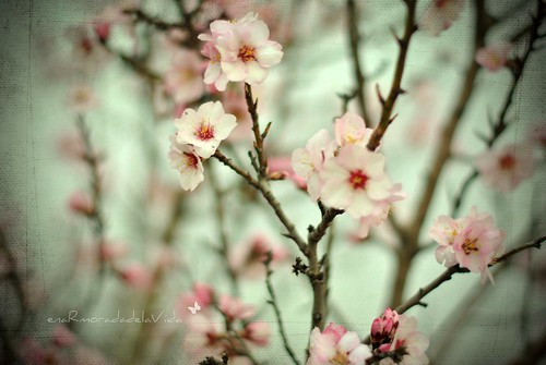 {about almonds and flowers...}