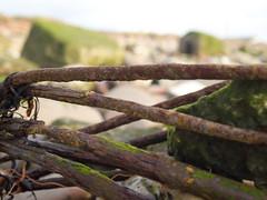 Crosby Beach-5 by Fizzpup