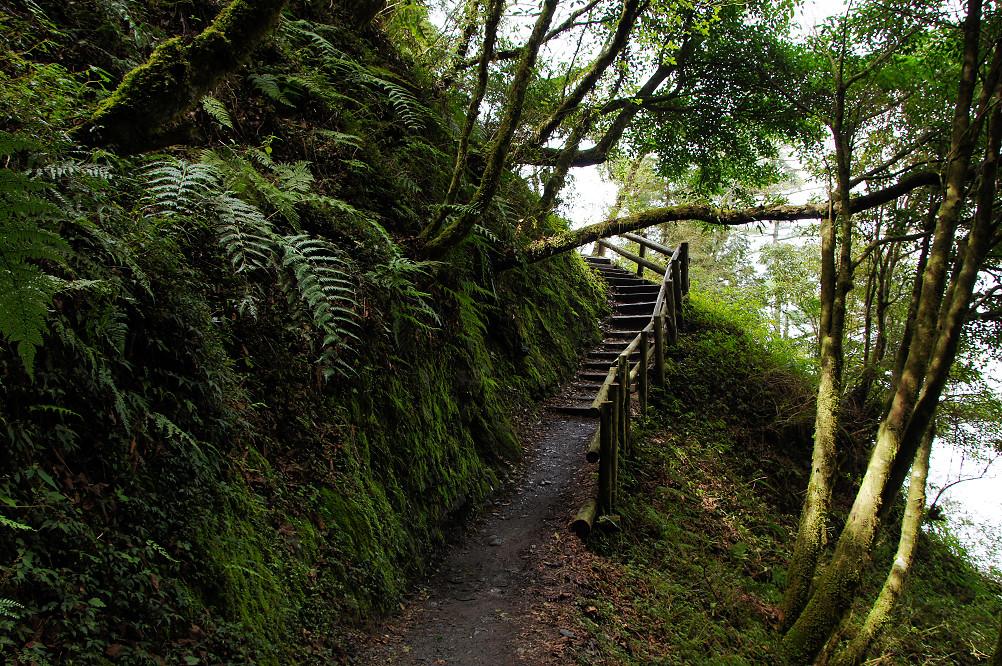 觀霧巨木步道-020