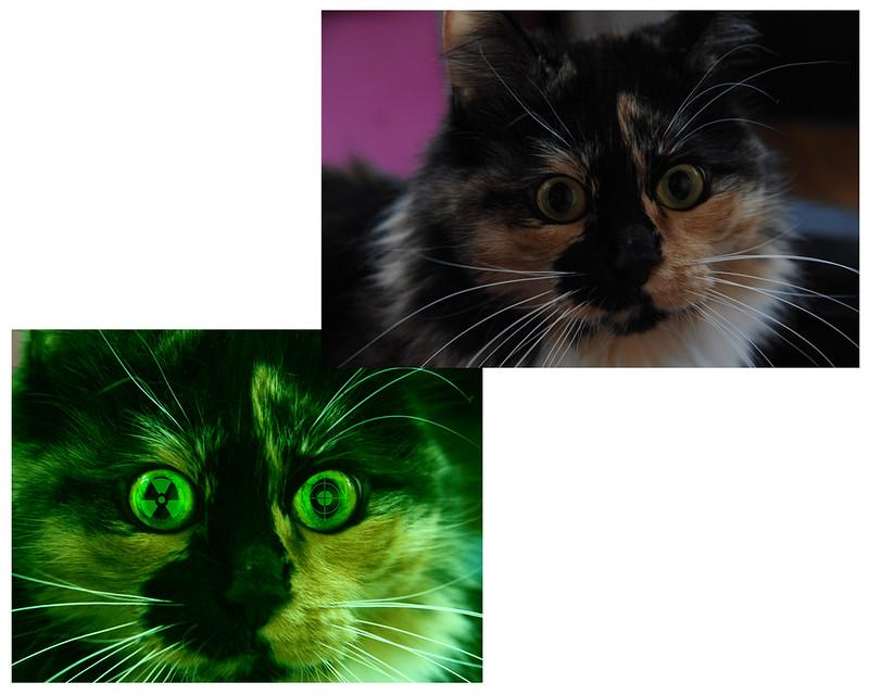Зеленая виртуальная кошка 7054283557_2683a5cbb0_c