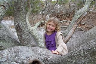 Q5 in tree