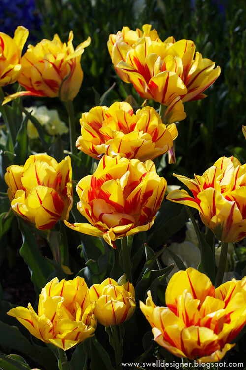 tulip-gardens-thanksgiving-point-3