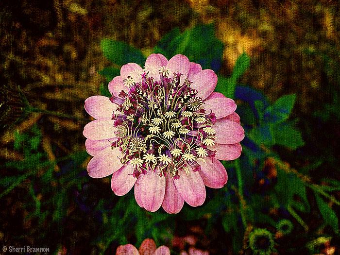 PSE flower