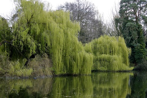 Wrest Park Willows
