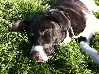 Emma chillin' in the grass