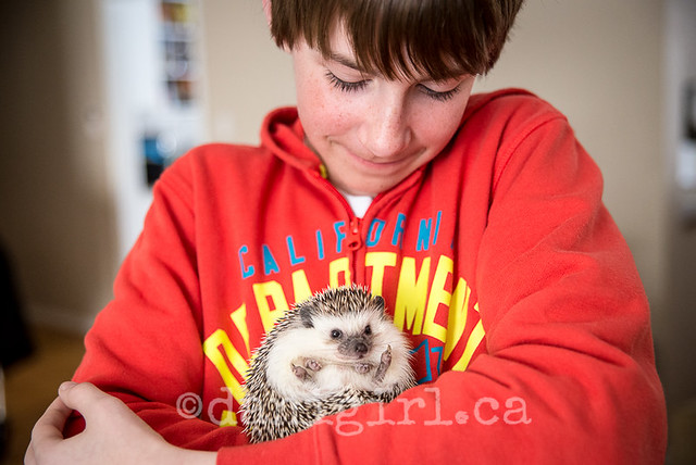 A boy and his hedgie