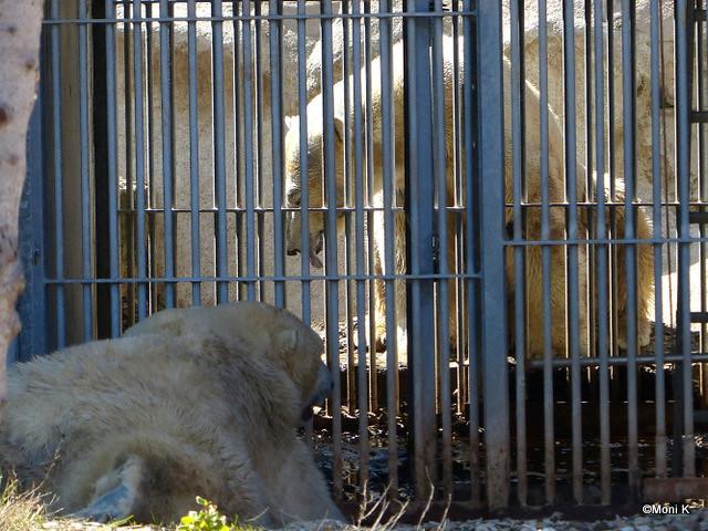 16-am Gitter wird geflirtet