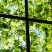 蔦と窓 by neco_onsen