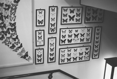 The butterfly wall