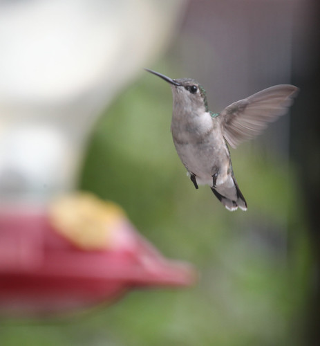 Hummingbird in flight by Fotochoice Photography