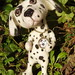 dalmation-needlefelt7