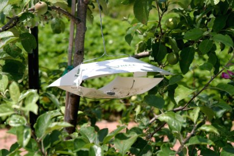 Traps for monitoring insect populations