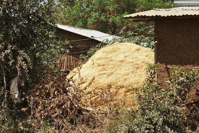 Animal feed stack in Godino, Ethiopia