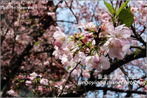 台北淡水_天元宮20120315_I3039
