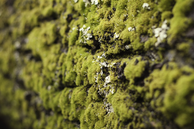 Mossy Log blog