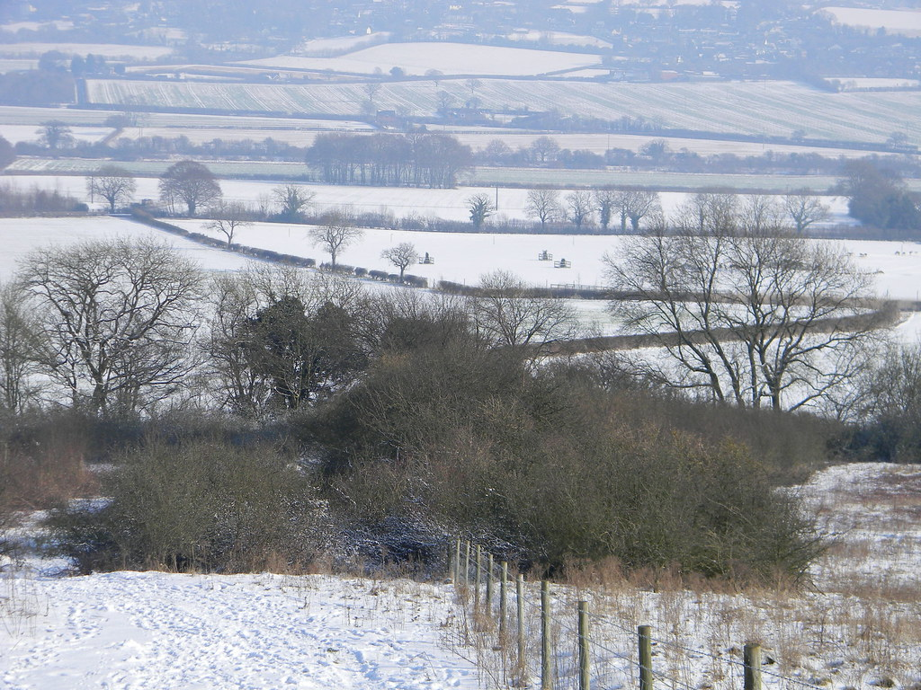 Hedges in the snow Saunderton to Bledlow