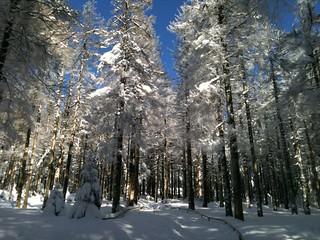 Harz-Wald