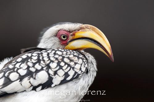 Prehistoric by Megan Lorenz