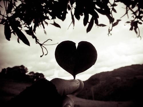 Heart shaped leaf / Folha em formato de coração