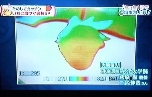 草莓05.JPG