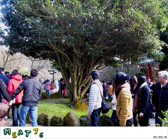 【遊記】陽明山國家公園|櫻花乍現在粉紅意境的花花世界01