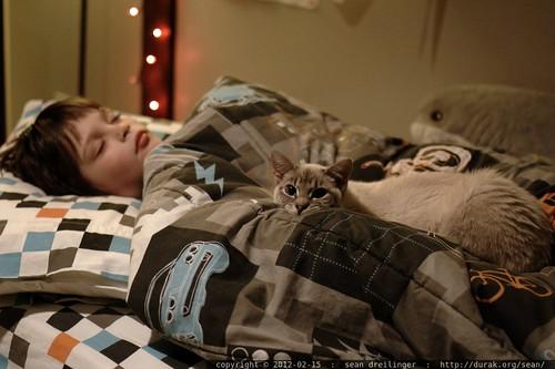 nick sleeps while kitten snowball keeps vigil    MG 8690