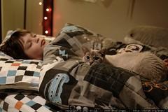 nick sleeps while kitten snowball keeps vigil    MG …