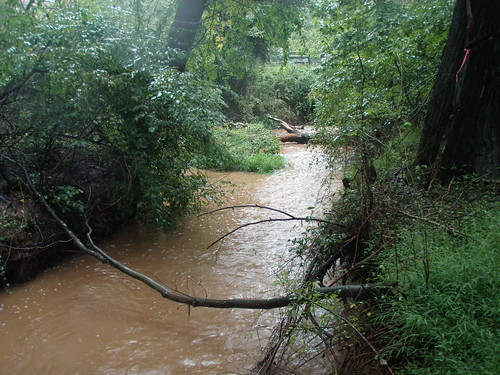 Photo set of Sherwood Forest Stream Restoration