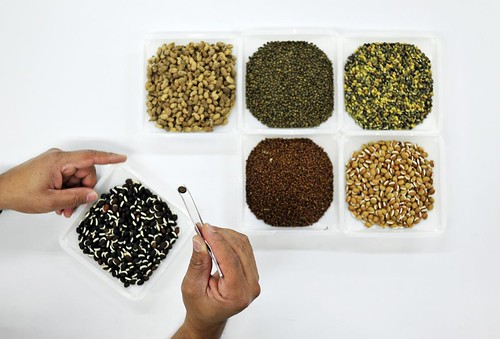 NP Forage seeds in gene bank