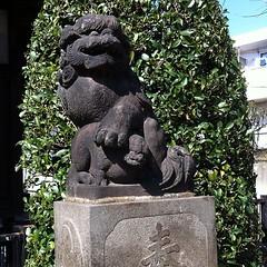 狛犬探訪 馬込の熊野神社 向かって右方のみ子連れ