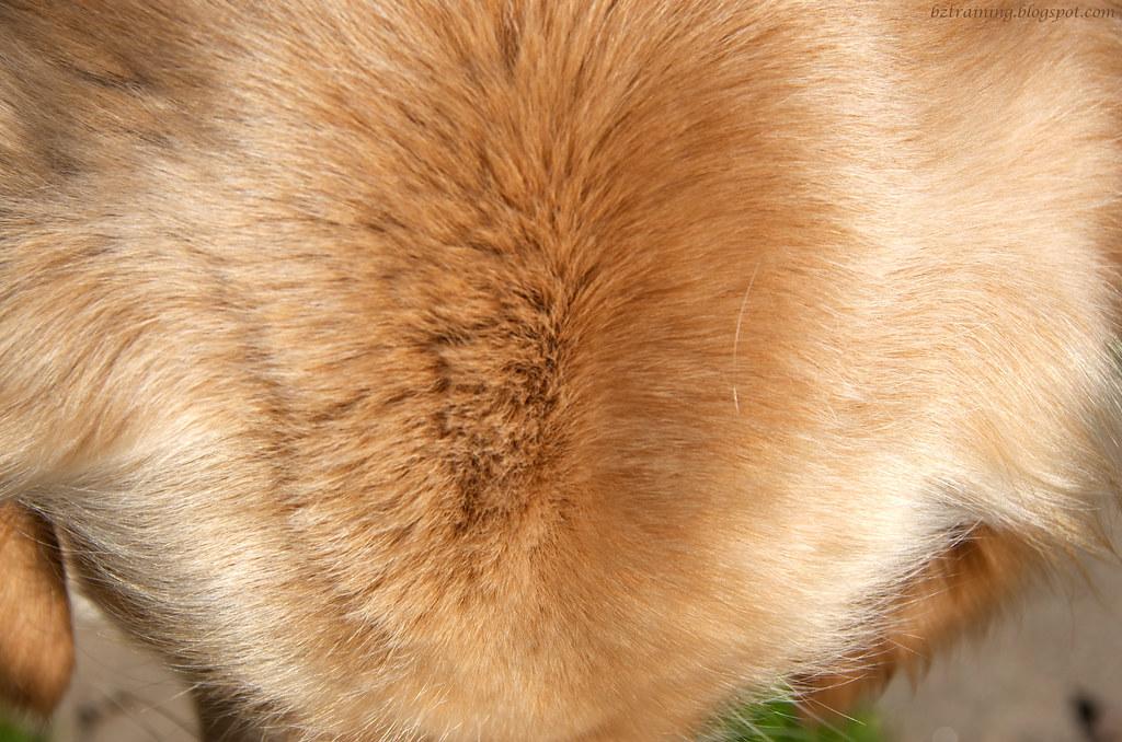 Fuzzy Head