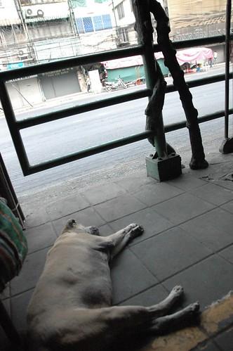 相変わらず気持ちよく落ちてる犬