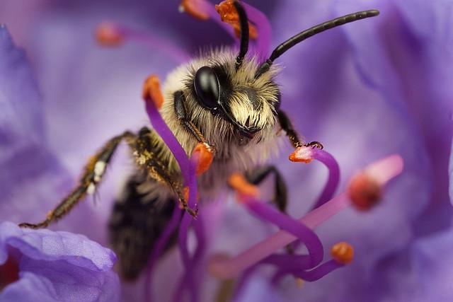 Miner Bee 5