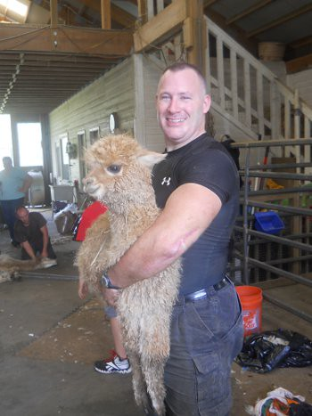 Jim Carries Suzie Q Over to be Shorn