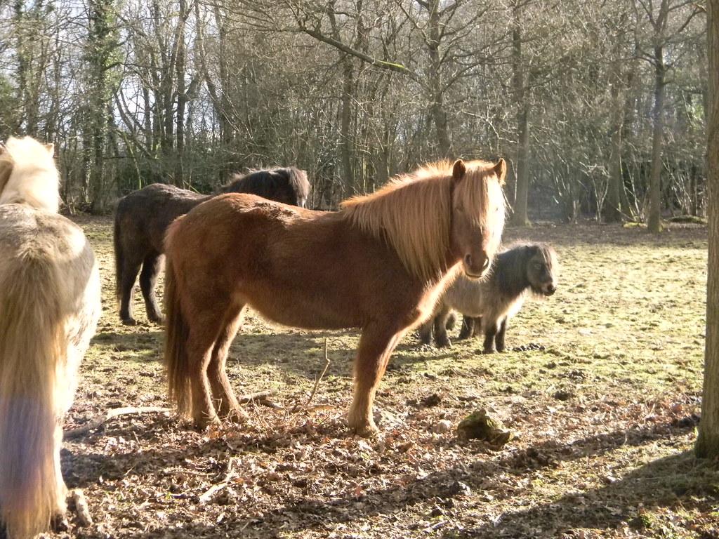 Champion the Wonder Horse Like a streak of lightnin' flashin' cross the sky....... Whyteleafe to Woldingham