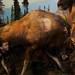 Moose by Traer Scott