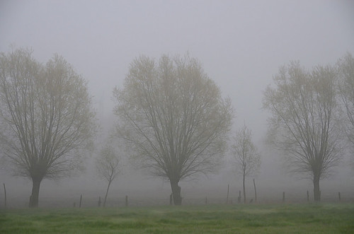 A MISTY MORNING, THE START OF ANOTHER DAY IN MY BELOVED FLANDERS!