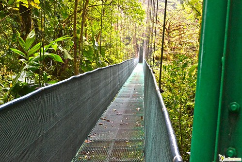 Ziplining and Hanging Bridges in the Rain Forest