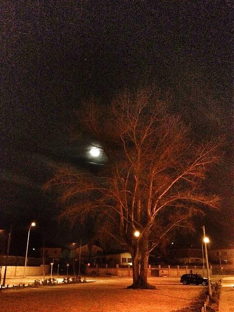 Luna & árbol