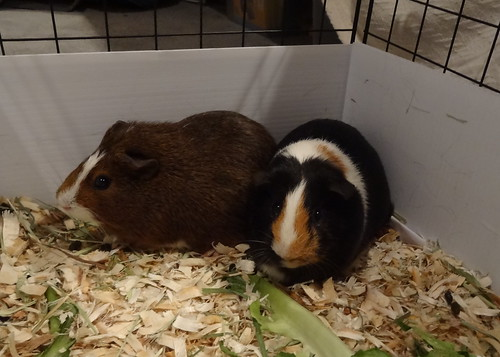 Meet Betty and Estelle!