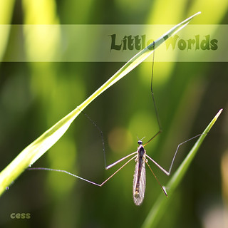 Little worlds - Stretch