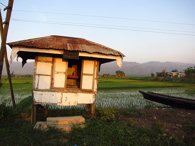 Shack by Rice Fields