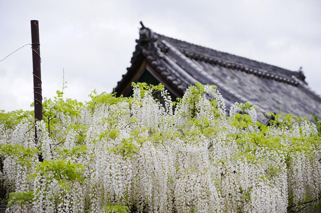 Osaka Fujiidera